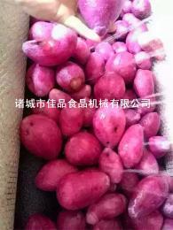 紅薯去皮清洗機 土豆去皮清洗機價格