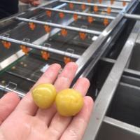 蔬菜加工设备厂家 自动清洗机洗菜机