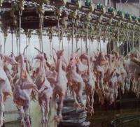 家禽屠宰机械 肉鸡宰杀掏脏分割生产线