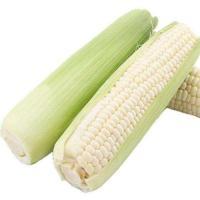 直銷 玉米切頭去尾機  甜玉米切頭去尾設備  胡蘿卜去尾機