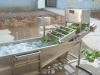 現貨供應 小白菜翻浪氣泡清洗機 全自動蔬菜加工清洗設備
