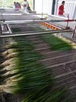 供應貴州香蔥清洗機 連續式香蔥清洗機生產廠家
