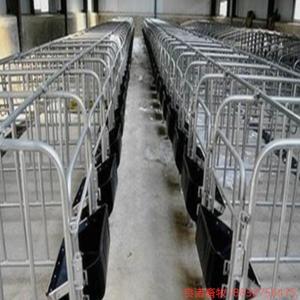 养猪设备 母猪定位栏生产厂家